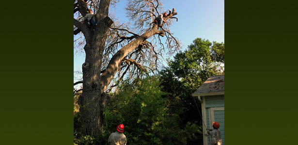safe dead tree removal