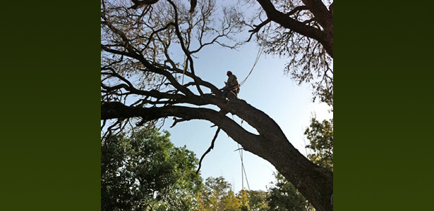 Austin professional Tree services