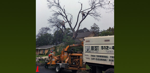 Best Tree Care Services