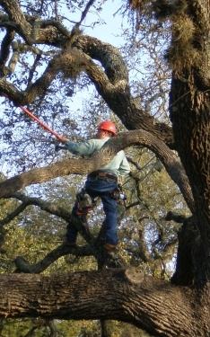 Tree Service Lakeway