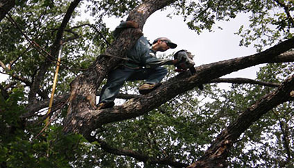 Austin Storm Damage Tree Services