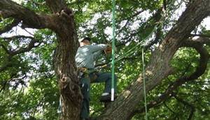 Austin Tree Pruning