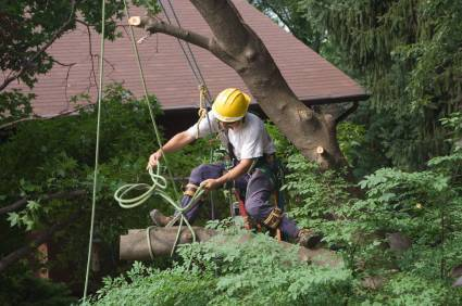 Austin Tree Removal