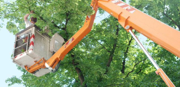 Austin Commercial Tree Services