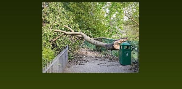 Austin Fallen Tree Removal