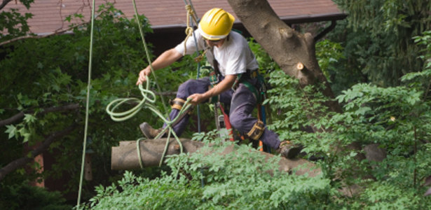 Austin Residential Tree Services