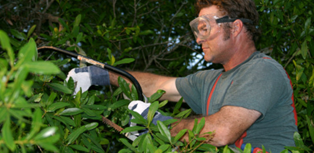 Austin Tree Pruning Services
