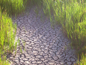 Austin, Pflugerville Lakeway drought