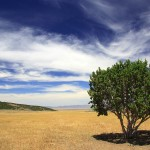 Extended Drought Tree Care – These Do's & Don'ts May Surprise You
