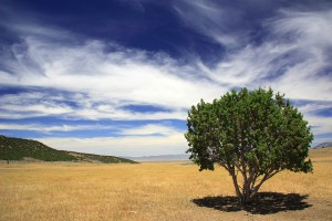 tree care dry drought watering