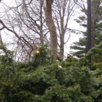 How To Handle Storm Damaged Trees
