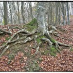 Caring For The Roots Of Your Best Trees