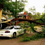 The Real Costs of Cheap or DIY Tree Services