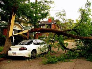 tree care post storm