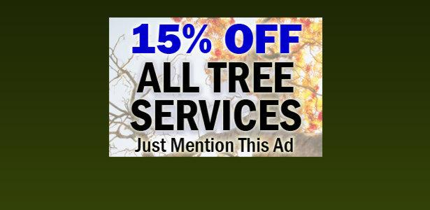 Austin Tree Service Removal Trimming Remove Dead Trees
