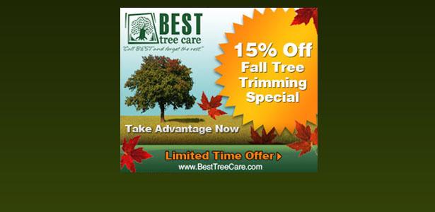 Austin Tree Service Specials