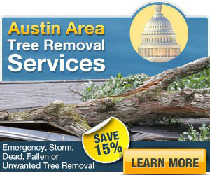 Save 15% off emergency tree removal